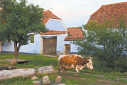 Prince Charles' farmhouse in Viscri
