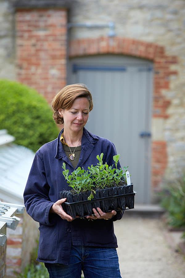 Polly Nicholson holding Lathyrus odoratus 'Earl Grey'