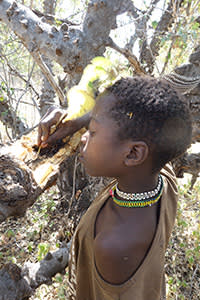 A young Hadza boy scoops honey from a tree
