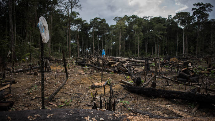 a deforested area in the Pau Rosa community near Manaus, the capital of Amazonas state