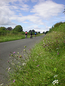 Cyclists pass a verge with knapweed and cow parsley