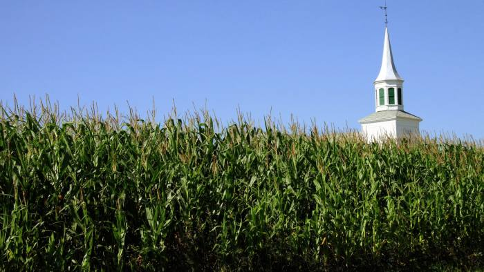 This July 30, 2008 photo shows growing on a Wisconsin farm. AFP PHOTO/ Karen BLEIER / AFP PHOTO / KAREN BLEIER