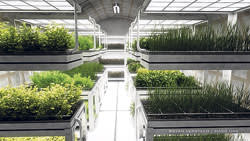 A computer-generated image of a Mars One farm featuring plants on shelves