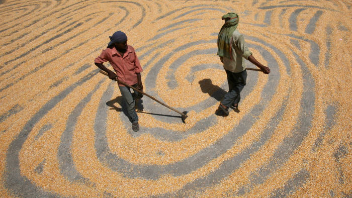 maize production in India