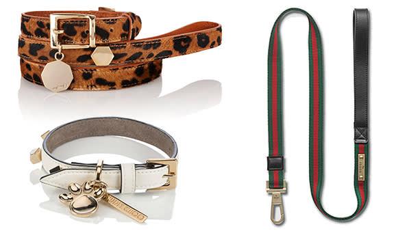 Meli Melo collar and lead, £99, melimelo.com; Jimmy Choo collar, £225, jimmychoo.com; Gucci web dog leash, £300, gucci.com