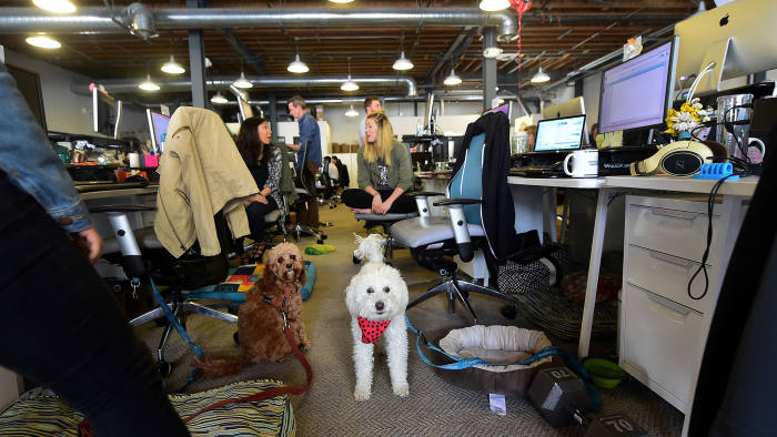 Dogs share the aisle with employees at DogVacay's offices in Santa Monica, California on March 21, 2016. FREDERIC J. BROWN/AFP/Getty Images