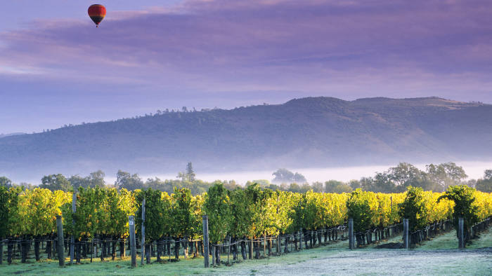 A vineyard near Oakville, Napa County