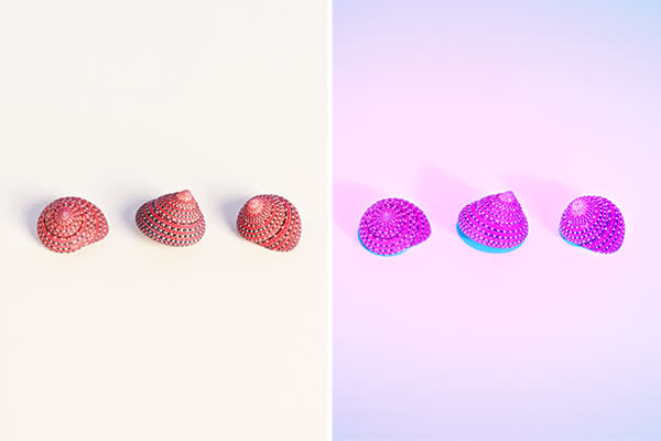 Strawberry top shells in normal lighting (left) and under ultraviolet light (right)