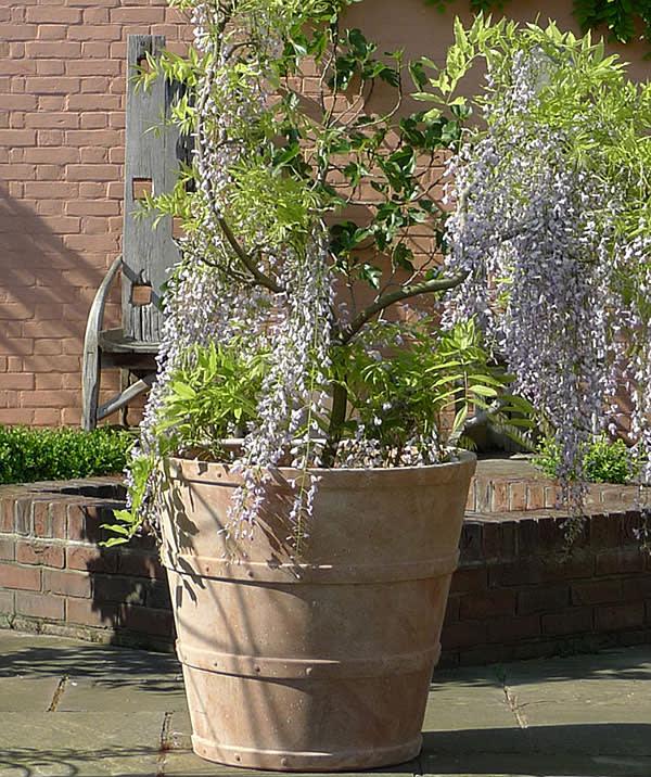 Terracotta pots by Italian Terrace