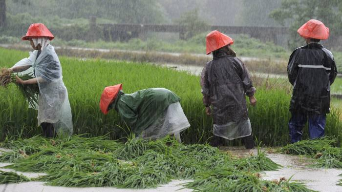 Farmers rush to transplant paddy on a flooded field amid heavy rainfall in Zhuzhou, Hunan province, China, July 24, 2015. Approximately a million people have been affected by severe downpours in several Chinese provinces, causing collapsed houses, decimating crops as well as blocking highways, Xinhua News Agency reported. Picture taken July 24, 2015. REUTERS/China Daily CHINA OUT. NO COMMERCIAL OR EDITORIAL SALES IN CHINA - RTX1LQVX