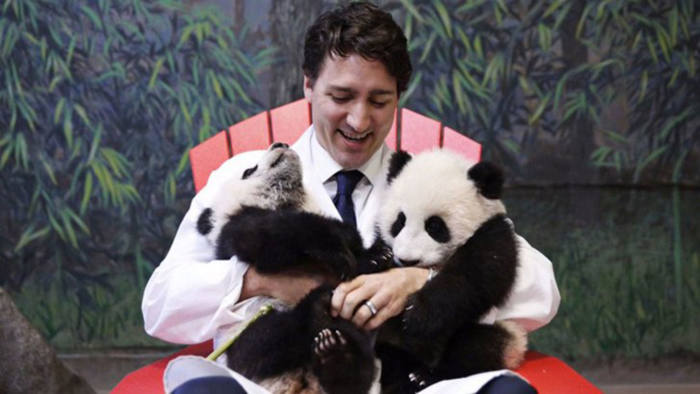 Canada's prime minister Justin Trudeau with twin cubs Jia Panpan and Jia Yueyue at Toronto Zoo, March 2017