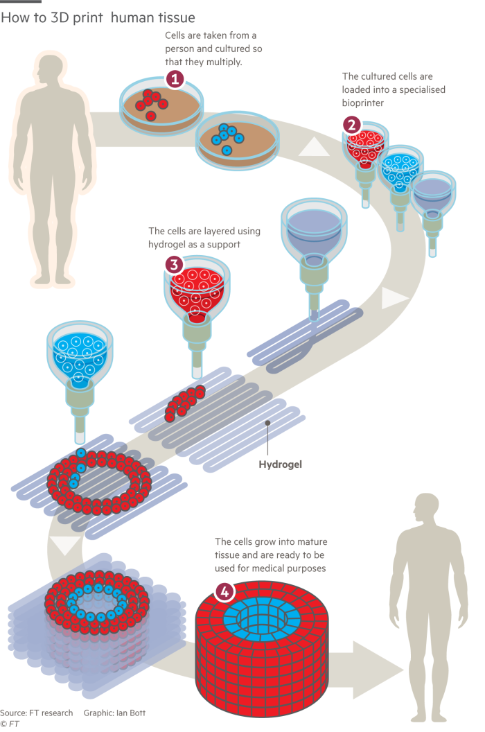 Source: FT. An illustration of the 3D bioprinting process used to 3D print liver tissues.
