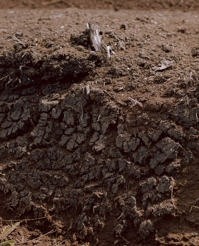 Critics of Bord na Móna argue it should stop harvesting peat earlier than the 2028 target. Climatologist John Sweeney says: 'Most of the peat will be gone by then. That's too far into the future'