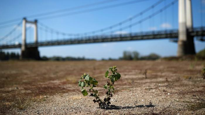 A plant is seen in a branch of the Loire river in Montjean-sur-Loire as drought persists in France, September 17, 2019. REUTERS/Stephane Mahe