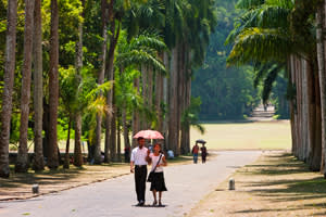 Sri Lanka, Ceylon, Royal Palm Tree Avenue in the Peradeniya Royal Botanical Gardens near Kandy