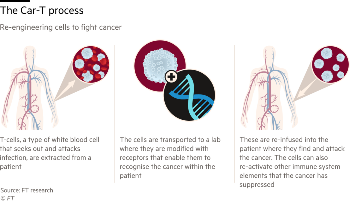 Infographic showing the Car-T gene editing method