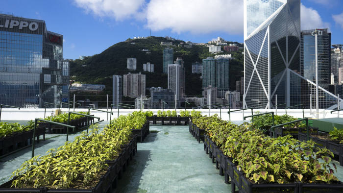 One of Rooftop Republic's urban gardens in Hong Kong