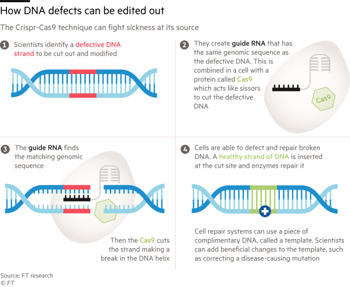 Infographic showing how scientists can edit DNA with the CrispR method