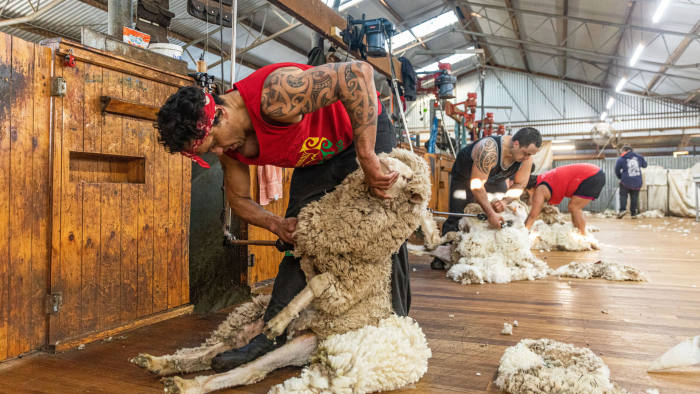Australian Drought - Pooginook Farm near Griffith. Picture shows: Sheep shearing in the woolshed