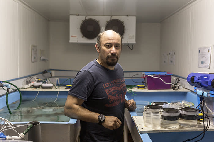 Marine biologist Luis Vargas-Chacoff is testing how the Antarctic spiny plunderfish responds to water in different temperatures