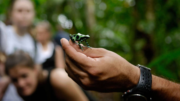 ABFJ1N Ecotourists observing a green and black poison frog on a guided rainforest walk, La selva, Costa Rica, ecotourism