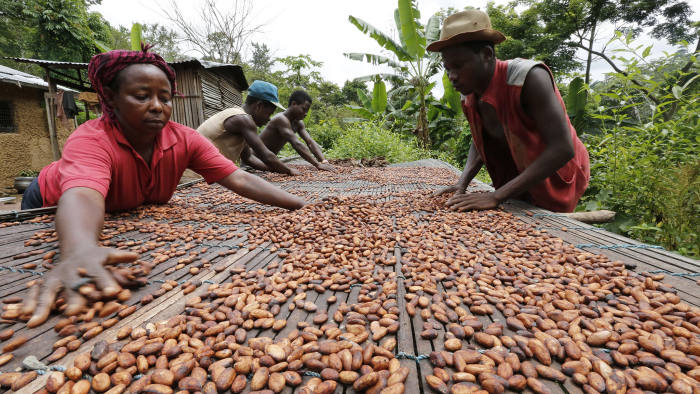People work with cocoa beans in Enchi...People work with cocoa beans in Enchi June 17, 2014. Picture taken June 17, 2014. To match Insight GHANA-IVORYCOAST/COCOA REUTERS/Thierry Gouegnon (GHANA - Tags: BUSINESS AGRICULTURE FOOD) - RTR40ECS
