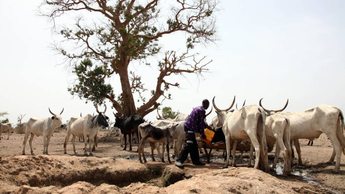 A Fulani herdsman water his cattle on a dusty plain between Malkohi and Yola town on May 7, 2015. AFP PHOTO/EMMANUEL AREWA        (Photo credit should read EMMANUEL AREWA/AFP/Getty Images)