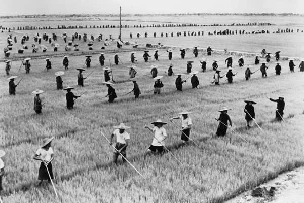 Rice farmers during the Great Leap Forward, a policy that caused famine rather than economic development