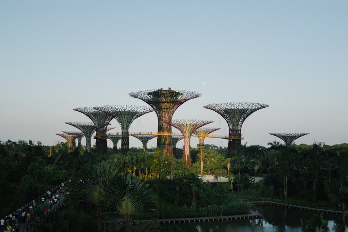 Solar-powered 'super-trees' at Singapore's Gardens by the Bay