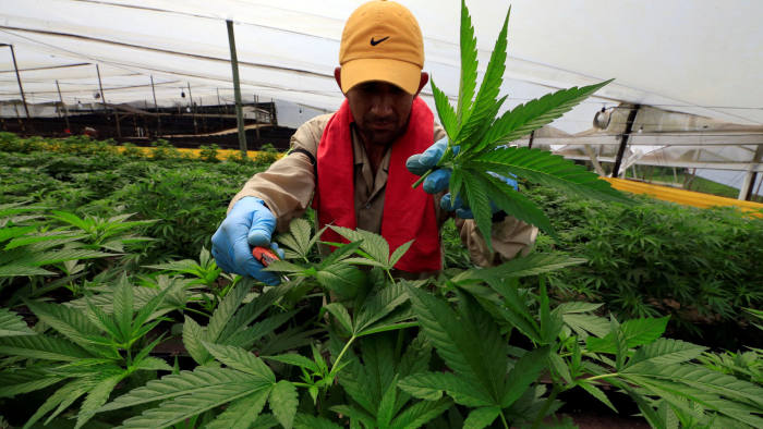 Colombia seeks to be a cut above on cannabis | Financial Times