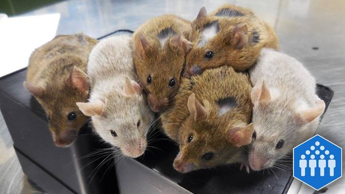 11-week-old mice created using eggs grown from stem cells