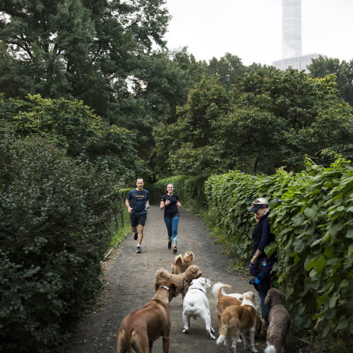 Central Park provides encounters with all man kind - and plenty of animals too