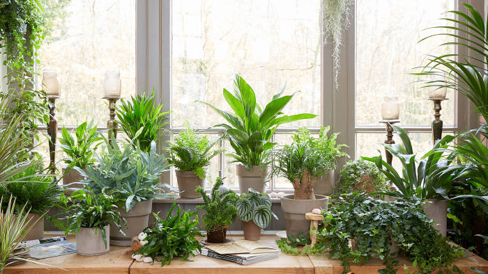 Survival strategies: how to keep houseplants alive over ... on winter fragrant plants, winter potted plants, winter deck plants, winter hibiscus, winter hardy plants, winter perennial plants, winter interest plants, winter patio plants, winter outdoor plants, winter container plants, winter flowering plants, winter house cookies, great winter plants, winter yard plants, winter porch plants, winter planter plants, winter house art, winter shade plants, winter blooming plants, winter house landscaping,