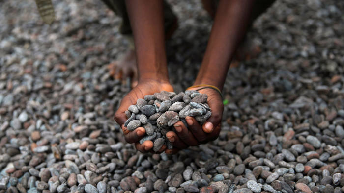 FILE PHOTO: A farmer picks up cocoa beans while spreading them to dry on an open ground in Iragbiji village, southwest Nigeria August 25, 2014. REUTERS/Akintunde Akinleye/File Photo