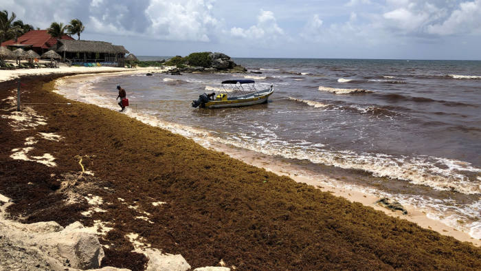 Mexican tourist industry counts cost as seaweed covers beaches