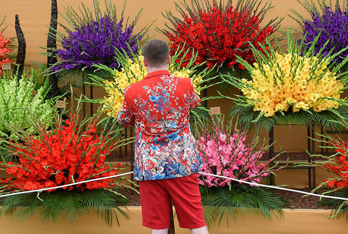 A man photographs a gladioli display at the RHS Chelsea Flower Show in London, Britain, May 21, 2018. REUTERS/Toby Melville
