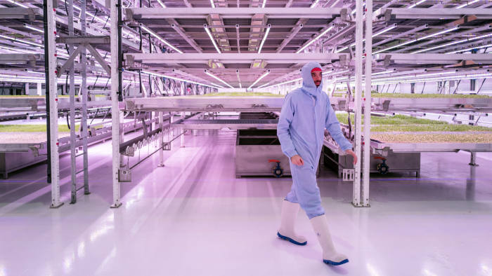 28/11//2018 Picture by Charlie Bibby/Financial Times Vertical farming story with Leila Abboud. Picture shows tomatoes growing under led light at the Jones Food Company facility near Scunthorpe.