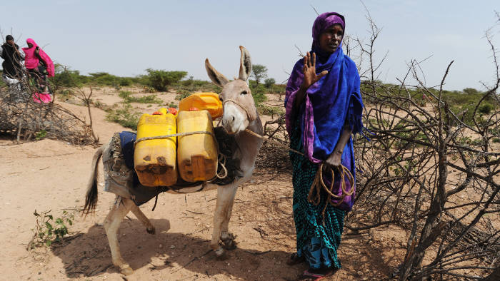 CARRO-YAAMBO, SOMALIA - JUNE 21: A Somali woman gestures after filling water cans tied to a donkey at a traditional cistern for harvesting rainwater, called a berkad, made by the Irish charity Concern-Worldwide as the Horn of Africa faces severe drought in Carro-Yaambo, a village 20 miles west of the capital Hargeisa, Somalia, on June 21, 2017. The United Nations and NGOs have sought to raise resilience in pastoralist communities that have seen their lifeblood herds of camels, goats and sheep decimated by up to 80 percent, leaving 6.7 million people in need of assistance to avoid famine in Somalia and Somaliland. (Photo by Scott Peterson/Getty Images)