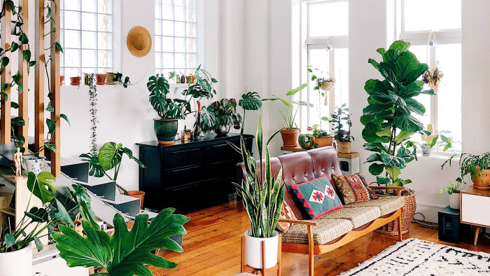 Houseplants Enjoy A Growth Spurt In Popularity Financial Times,Upholstered Club Chair And Ottoman