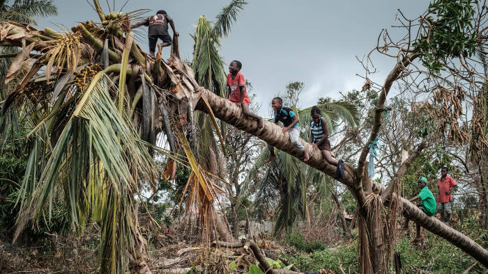 TOPSHOT - Children climb on a coconut tree damaged by the winds of cyclone Idai in Beira, Mozambique, on March 27, 2019. - Five cases of cholera have been confirmed in Mozambique following the cyclone that ravaged the country killing at least 468 people, a government health official said on March 27, 2019. Cyclone Idai smashed into Mozambique on March 15, unleashing hurricane-force winds and heavy rains that flooded much of the centre of the poor southern African country and then battered eastern Zimbabwe and Malawi. (Photo by Yasuyoshi CHIBA / AFP) (Photo credit should read YASUYOSHI CHIBA/AFP via Getty Images)