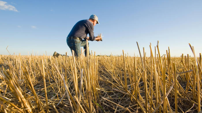 KCNPHN farmer in a field of grain stubble near Winnipeg, Manitoba, Canada