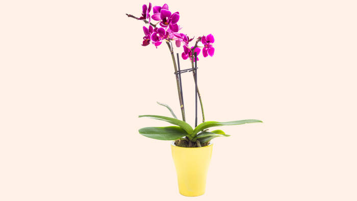 Here's why I hate orchids | Financial Times