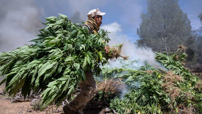 Mexican soldiers destroy a marihuana plantation near La Rumorosa town in Tecate, Baja California state, Mexico on August 28, 2018. - During the operation, the Army destroyed two marihuana plantations with a total surface area of 19,000 square meters and seized a clandestine laboratory of crystal meth. (Photo by Guillermo Arias / AFP) (Photo credit should read GUILLERMO ARIAS/AFP/Getty Images)