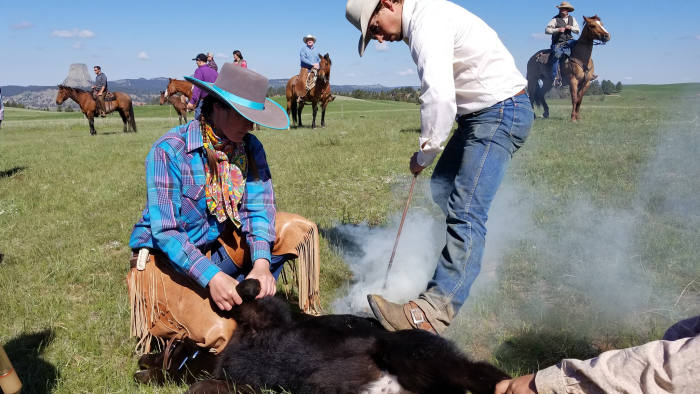 branding cattle at Ogden Driskill ranch Wyoming pic taken by Rob Jennings
