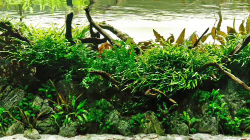 Aquascaping Landscape Gardening But Underwater Financial Times