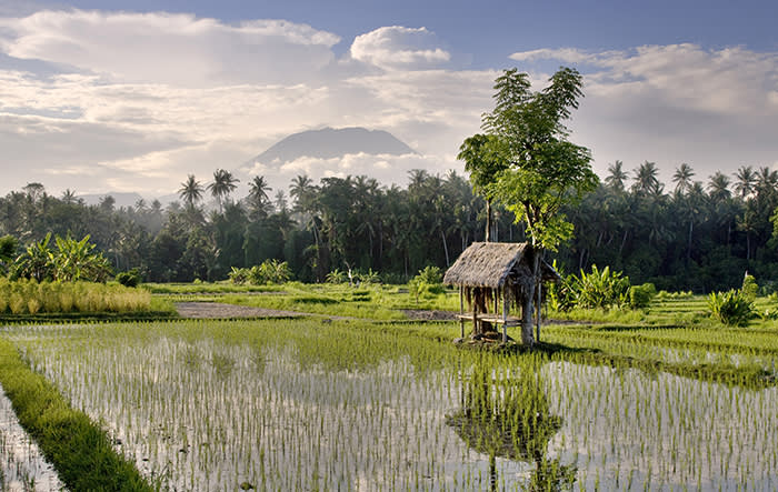 Indonesia, Bali Island, Bali, Klungkung, A ricefield and shelter with Mount Agung in the background (C) Tim Mannakee / 4Corners Images