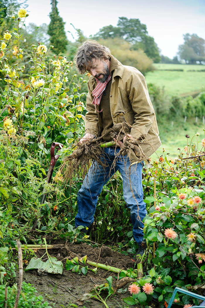 Dan Pearson digging up dahlia tubers in Autumn to store somewhere frost free over Winter (C) GAP Photos//Jason Ingram - Demonstrator: Dan Pearson
