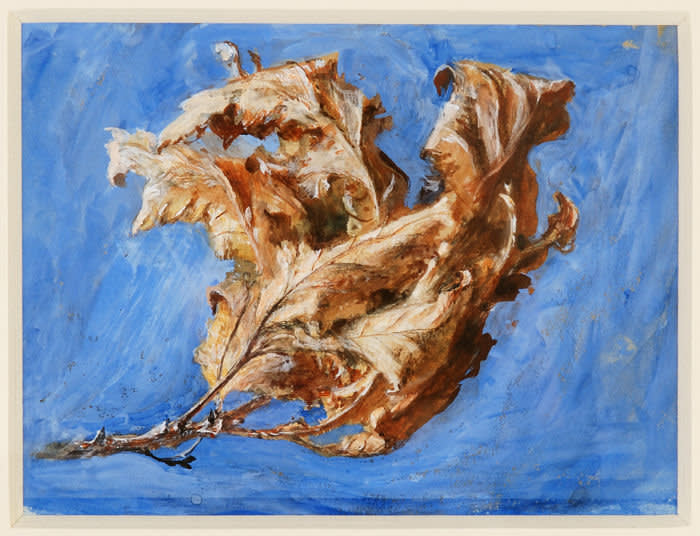 John Ruskin Study of Spray of Dead Oak Leaves 1879 Watercolour and bodycolour on paper © Collection of the Guild of St George / Museums Sheffield