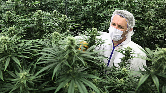A worker attends to marijuana plants in the flowering room at a Tweed facility in Smiths Falls, Ontario, Canada, Sept. 21, 2018. The decision by Canada to become the first major economy to fully legalize marijuana this month has created a new, multibillion dollar industry. (Dave Chan/The New York Times) Credit: New York Times / Redux / eyevine For further information please contact eyevine tel: +44 (0) 20 8709 8709 e-mail: info@eyevine.com www.eyevine.com