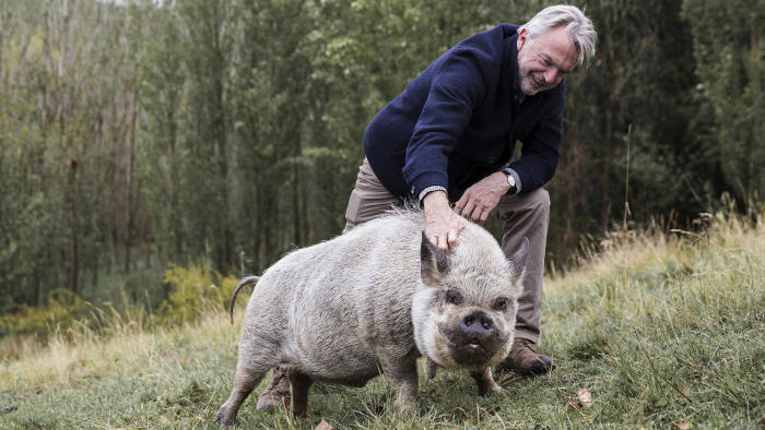 Sam's pet pig, Angelica the Kune Kune– a bloke pig… (C) Vaughan Brookfield for the FT